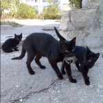 black_cats_with_mouse