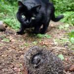 cat_and_hedgehog