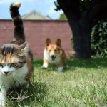 cat_dont_like_to_play_with_dog