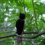 cat_on_the_tree