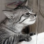 cat_water