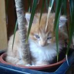 kitten_under_the_palm