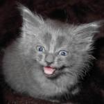 silver_meow
