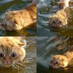 swimmingcat